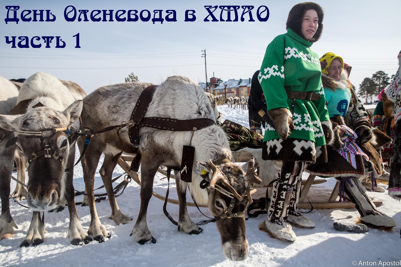 День оленевода в ХМАО. Часть 1.