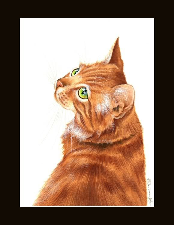 Ragdoll Cat Glance Print by I Garmashova