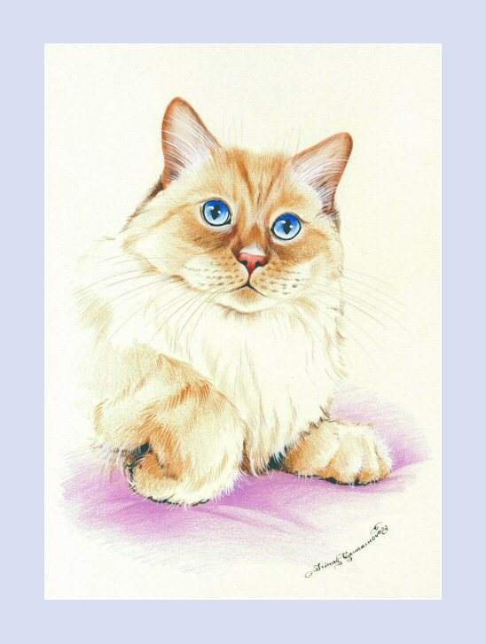 MaineCoon Cat Print Elegance by I Garmashova