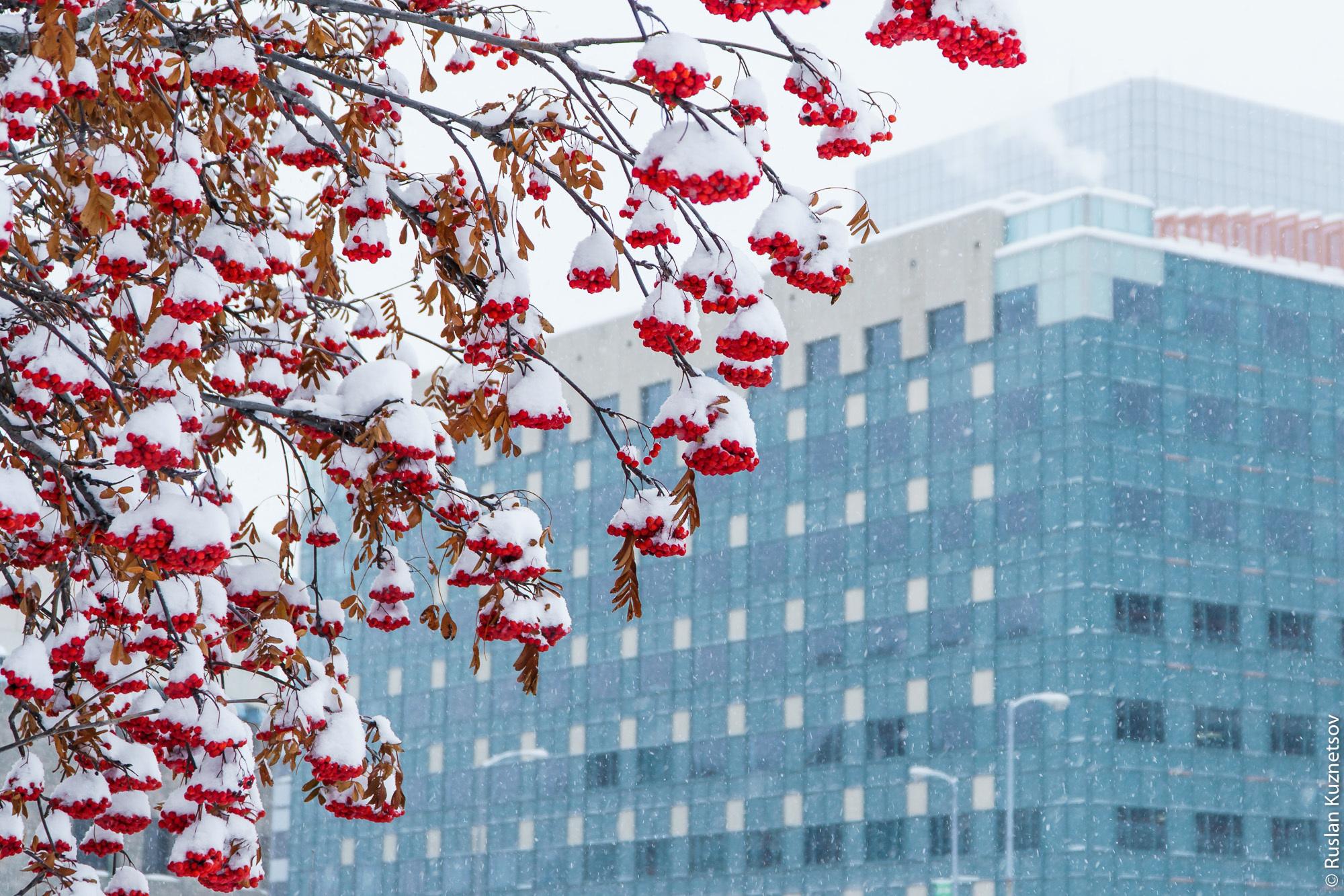 Зима в Анкоридже